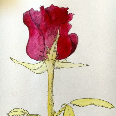 How to paint a piece of watercolor art. How To Illustrate A Rose - Step 6
