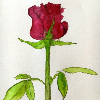 How to paint a piece of watercolor art. How To Illustrate A Rose - Step 7