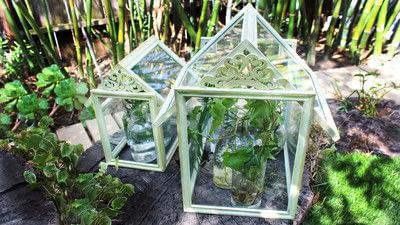 How to make a terrarium. Dollar Store Frame Terrariums - Step 4