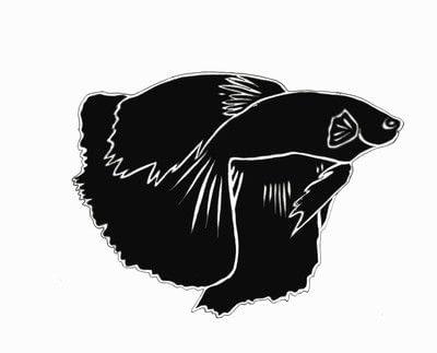 How to make silhouette art. Betta Fish Art - Step 2
