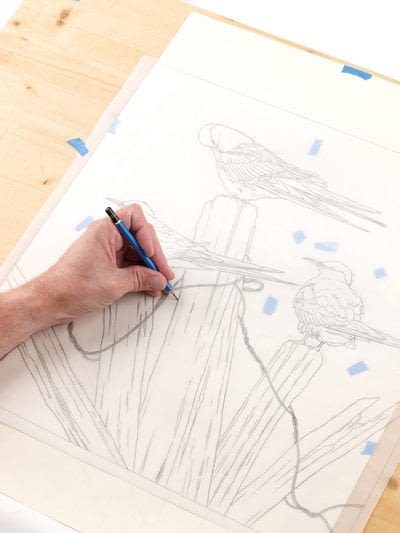 How to draw an animal drawing. Arctic Terns - Step 5