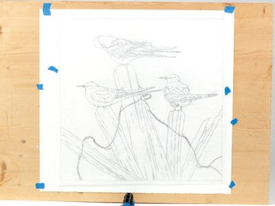 How to draw an animal drawing. Arctic Terns - Step 6