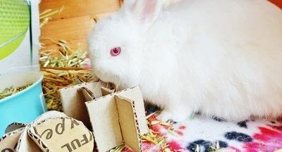 How to make a pet toy. Diy Cardboard Toys For Rabbits - Step 5