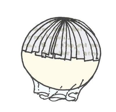How to make a piece of book art. Mushrooms & Ferns - Step 3