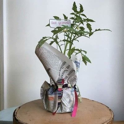 How to make a vase, pot or planter. Plantable Party Favors - Step 5