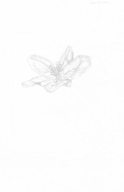 How to make a drawing. Apple Blossom - Step 2