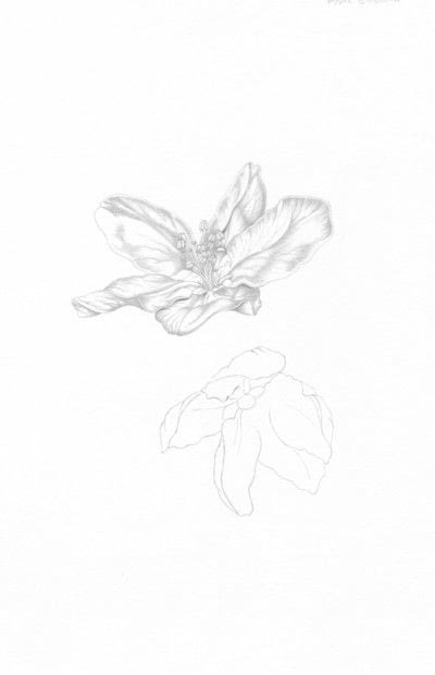 How to make a drawing. Apple Blossom - Step 3