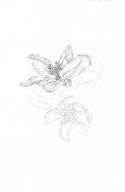 How to make a drawing. Apple Blossom - Step 4