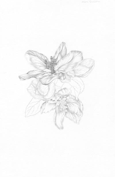 How to make a drawing. Apple Blossom - Step 5