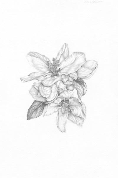 How to make a drawing. Apple Blossom - Step 7