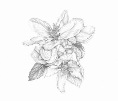 How to make a drawing. Apple Blossom - Step 8