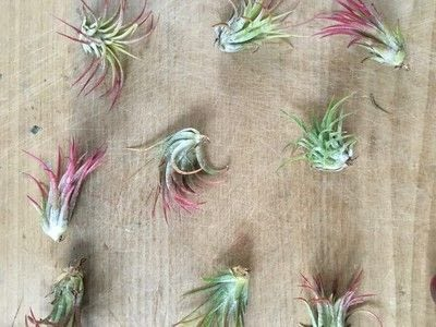 How to make a vase, pot or planter. Wire Air Plant Holders - Step 2