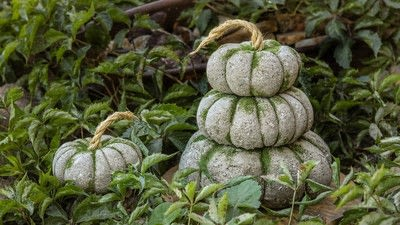 How to make a piece of seasonal decor. Easy Concrete Pumpkins In 20 Minutes - Step 8
