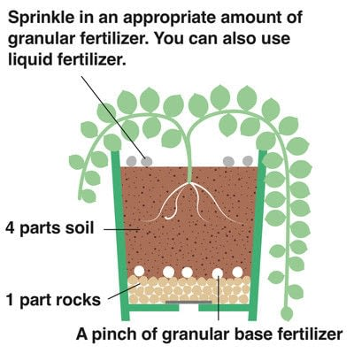 How to plant a plant / a flower / a tree. String Of Pearls - Step 4