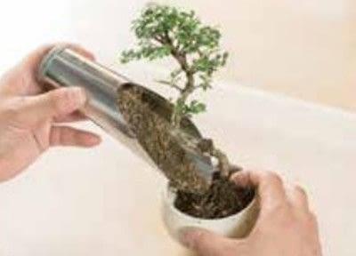How to plant a plant / a flower / a tree. Basic Bonsai Landscape Techniques - Step 6