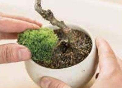 How to plant a plant / a flower / a tree. Basic Bonsai Landscape Techniques - Step 10