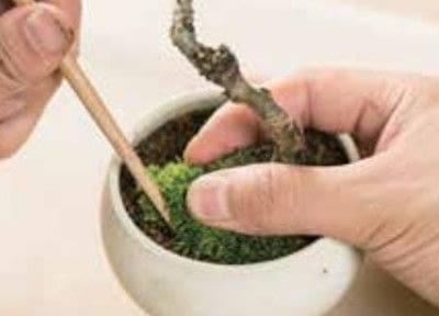 How to plant a plant / a flower / a tree. Basic Bonsai Landscape Techniques - Step 11