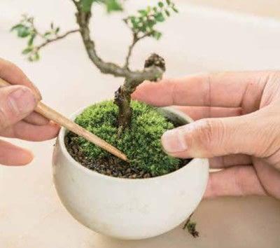 How to plant a plant / a flower / a tree. Basic Bonsai Landscape Techniques - Step 12
