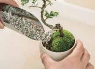How to plant a plant / a flower / a tree. Basic Bonsai Landscape Techniques - Step 13
