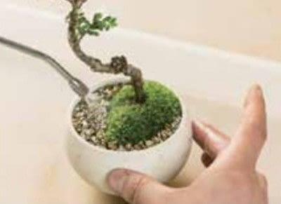 How to plant a plant / a flower / a tree. Basic Bonsai Landscape Techniques - Step 15