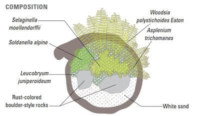How to plant a plant / a flower / a tree. Basic Bonsai Landscape Techniques - Step 17