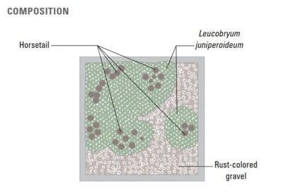 How to plant a plant / a flower / a tree. Basic Bonsai Landscape Techniques - Step 18