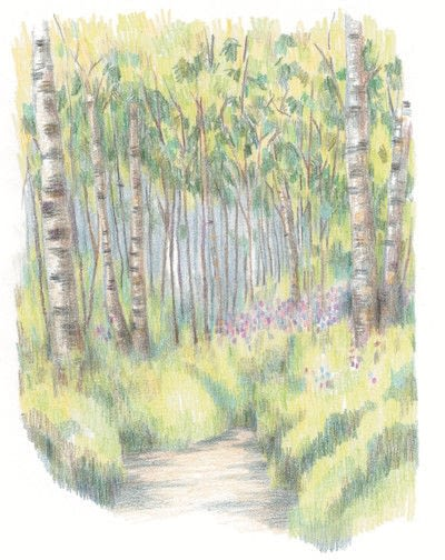 How to paint a landscape. How To Draw A Woodland - Step 7