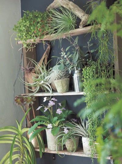 How to make a garden / terrarium. A Little Garden On Shelves - Step 4