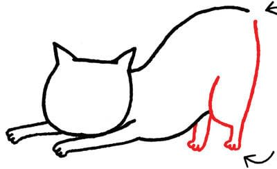How to draw an animal drawing. Draw A Str-e-e-e-tching Kitty - Step 4