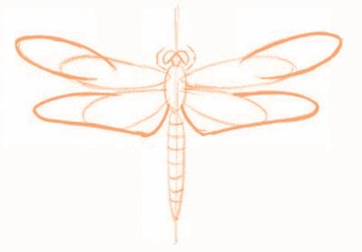 How to draw an animal drawing. Draw A Dragonfly - Step 4
