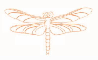 How to draw an animal drawing. Draw A Dragonfly - Step 6
