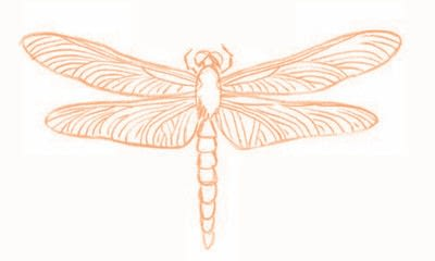 How to draw an animal drawing. Draw A Dragonfly - Step 7