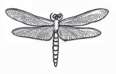 How to draw an animal drawing. Draw A Dragonfly - Step 8