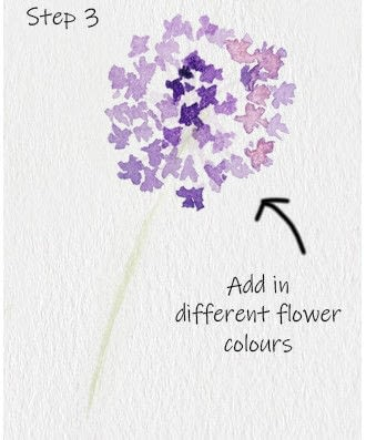 How to paint a piece of watercolor art. Allium Floral Watercolor Tutorial - Step 3