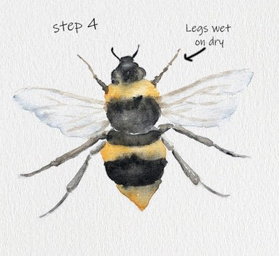 How to paint a piece of watercolor art. Bee Watercolor Tutorial - Step 4