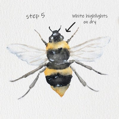 How to paint a piece of watercolor art. Bee Watercolor Tutorial - Step 5
