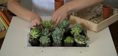 How to make a side table. Diy Succulent Table - Step 4
