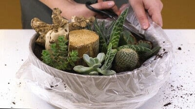 How to make a fairy garden. Diy: Succulents In A Bowl - Step 4