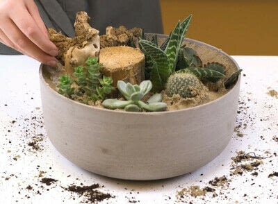 How to make a fairy garden. Diy: Succulents In A Bowl - Step 5