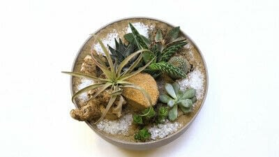 How to make a fairy garden. Diy: Succulents In A Bowl - Step 7