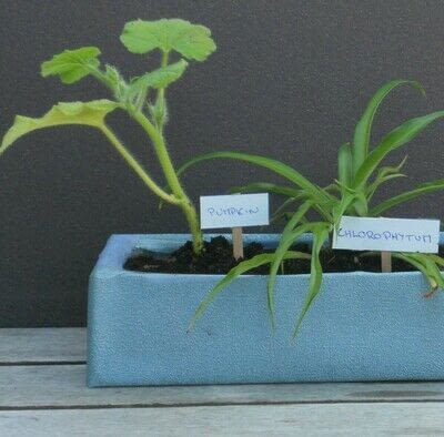 How to make a vase, pot or planter. Pots For My Spring Sowings - Step 2