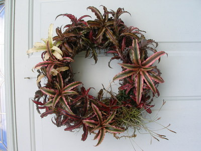 How to make a floral wreath. Bromelaid Living Wreath - Step 4