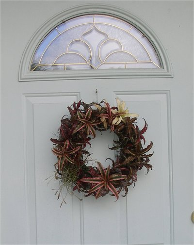 How to make a floral wreath. Bromelaid Living Wreath - Step 5