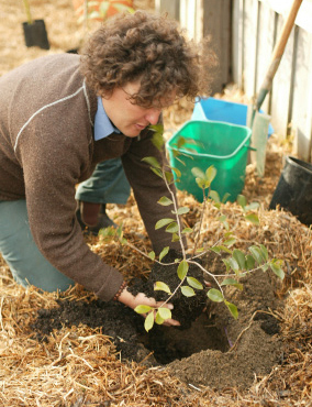 How to make a vase, pot or planter. Planting Fruit Trees In Pots - Step 7
