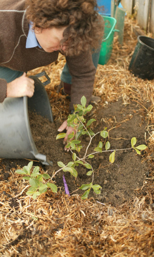 How to make a vase, pot or planter. Planting Fruit Trees In Pots - Step 9