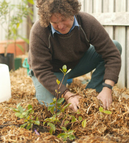 How to make a vase, pot or planter. Planting Fruit Trees In Pots - Step 10