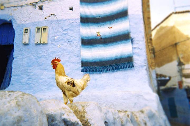 Creative Morocco