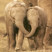 Elephant Mad
