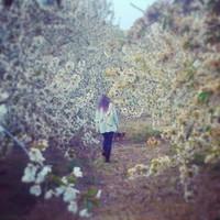 the plum girl