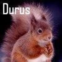 squirrel_face